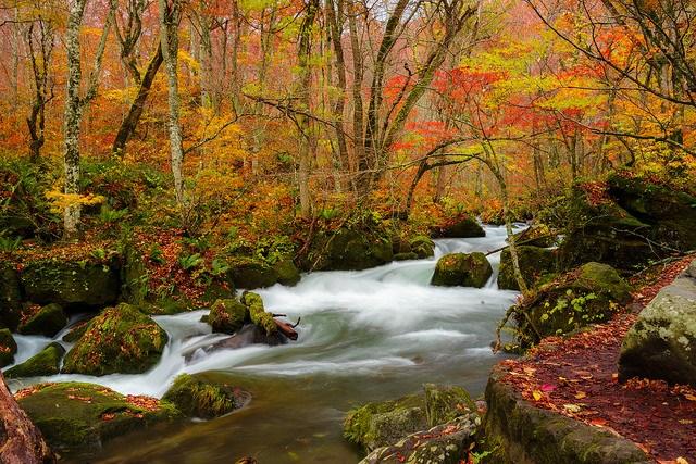 oirase_stream_fall_foliage_aomori